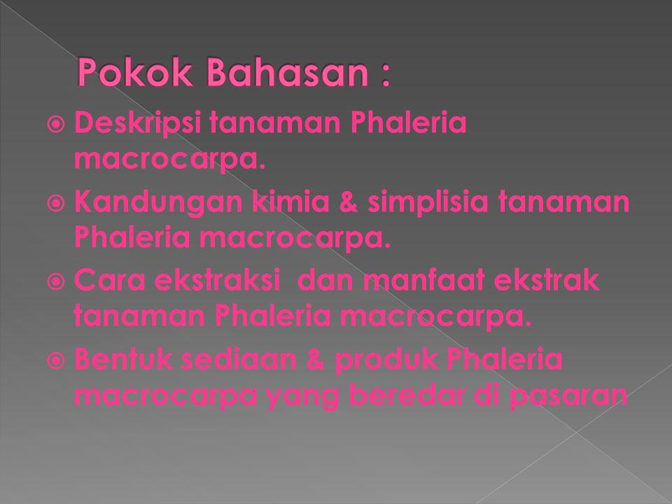 Pokok Bahasan : Deskripsi tanaman Phaleria macrocarpa.