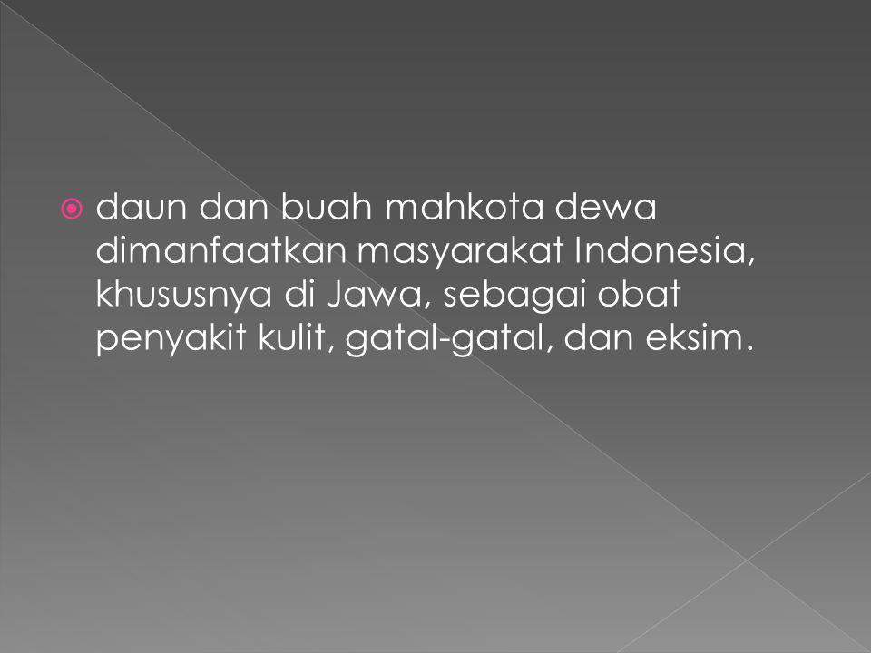 daun dan buah mahkota dewa dimanfaatkan masyarakat Indonesia, khususnya di Jawa, sebagai obat penyakit kulit, gatal-gatal, dan eksim.