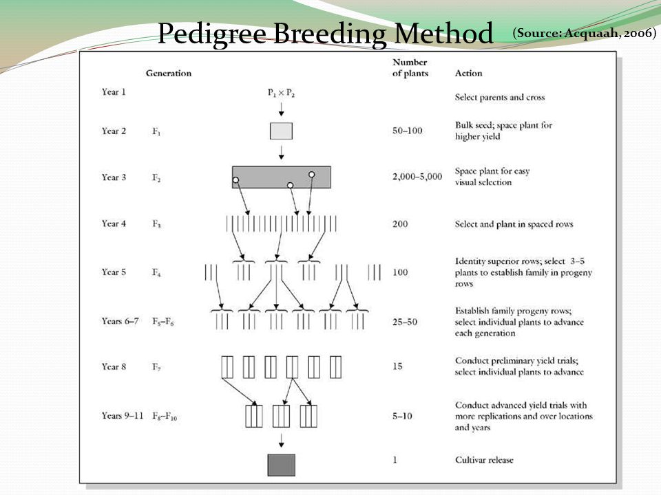 Pedigree Breeding Method