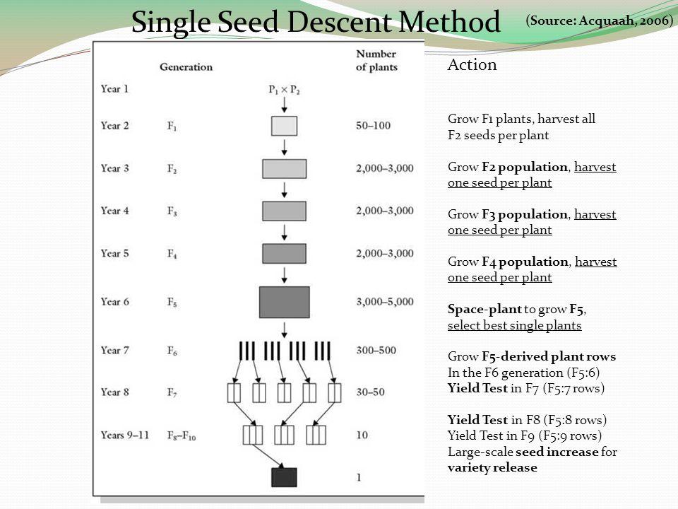 Single Seed Descent Method