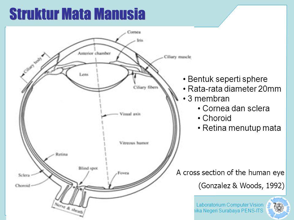 Struktur Mata Manusia Bentuk seperti sphere Rata-rata diameter 20mm