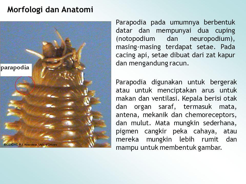 Morfologi dan Anatomi