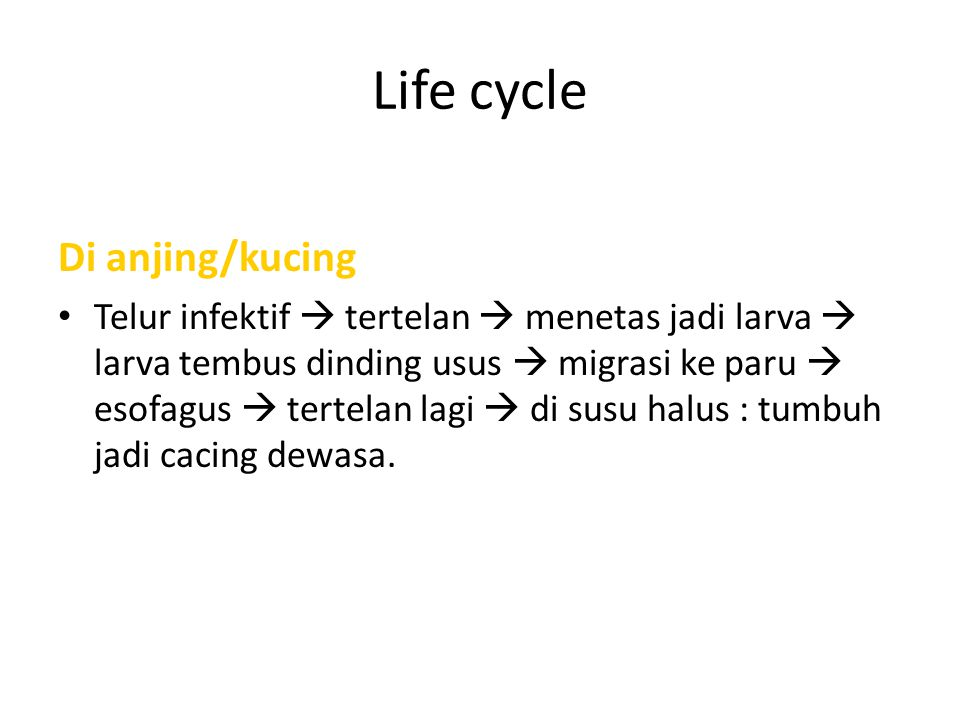 Life cycle Di anjing/kucing
