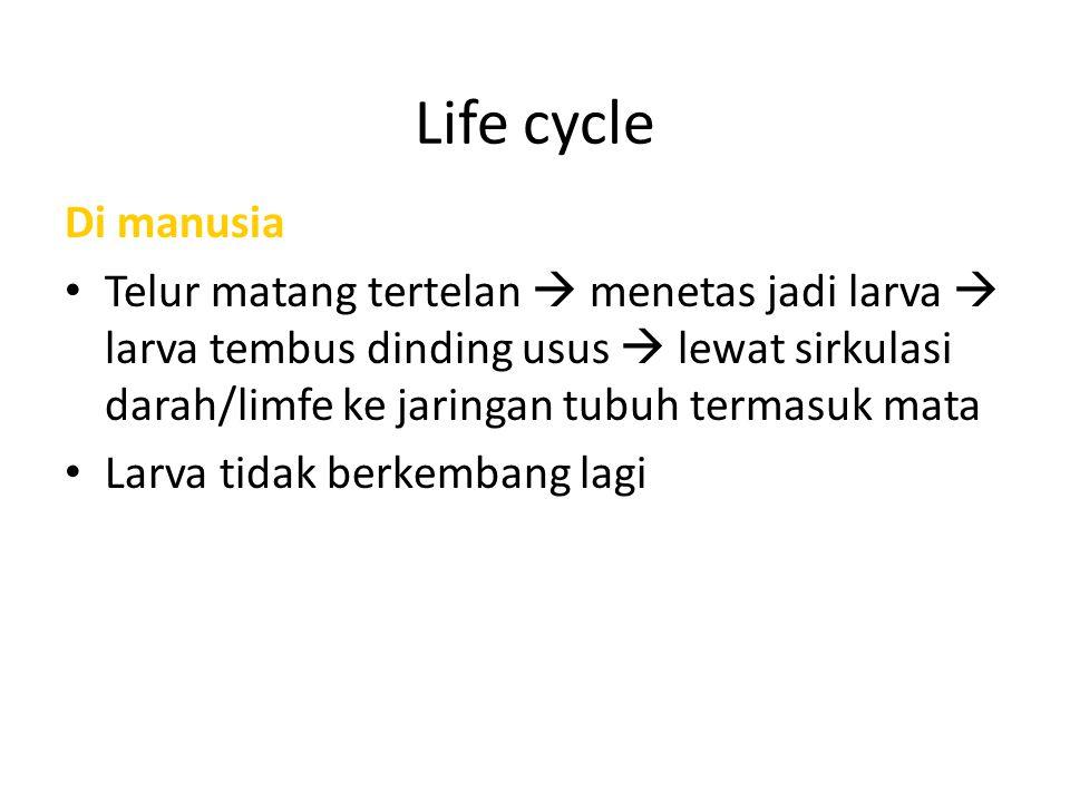 Life cycle Di manusia.