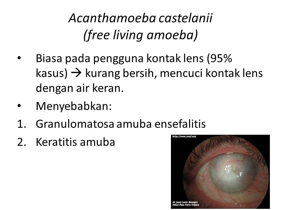 Acanthamoeba castelanii (free living amoeba)