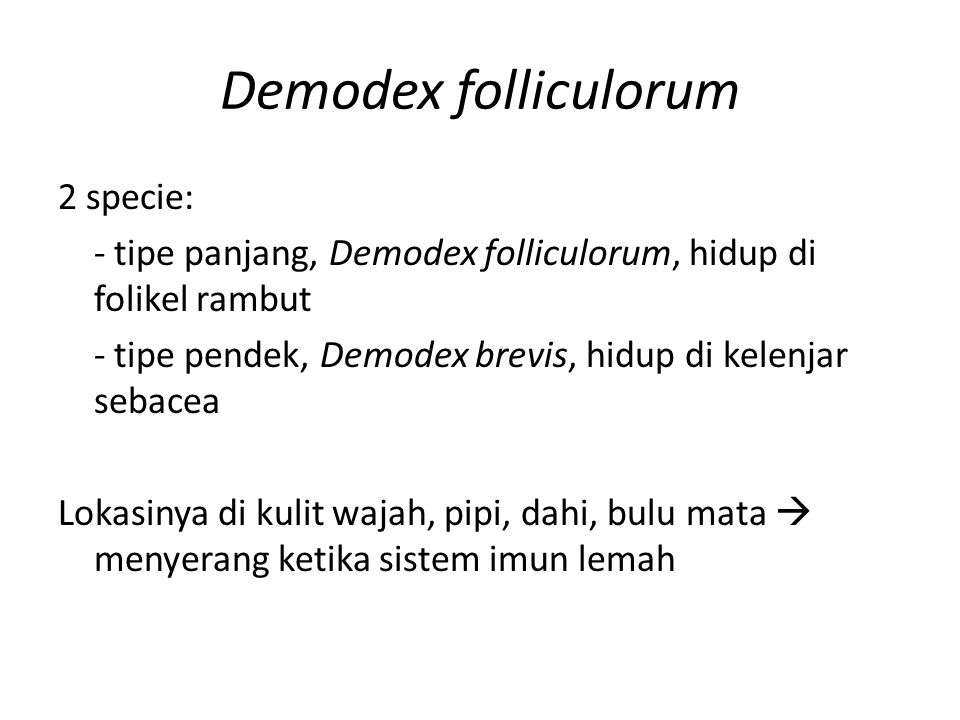 Demodex folliculorum 2 specie: