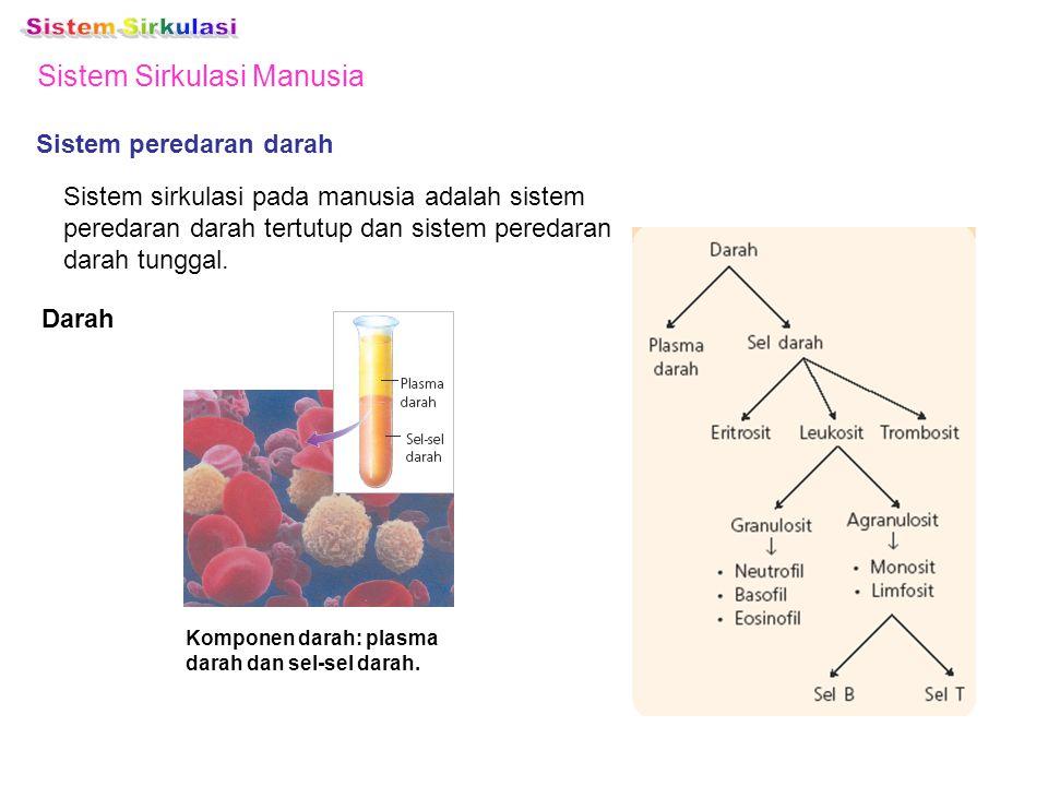 Sistem Sirkulasi Manusia