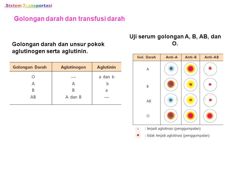 Uji serum golongan A, B, AB, dan O.