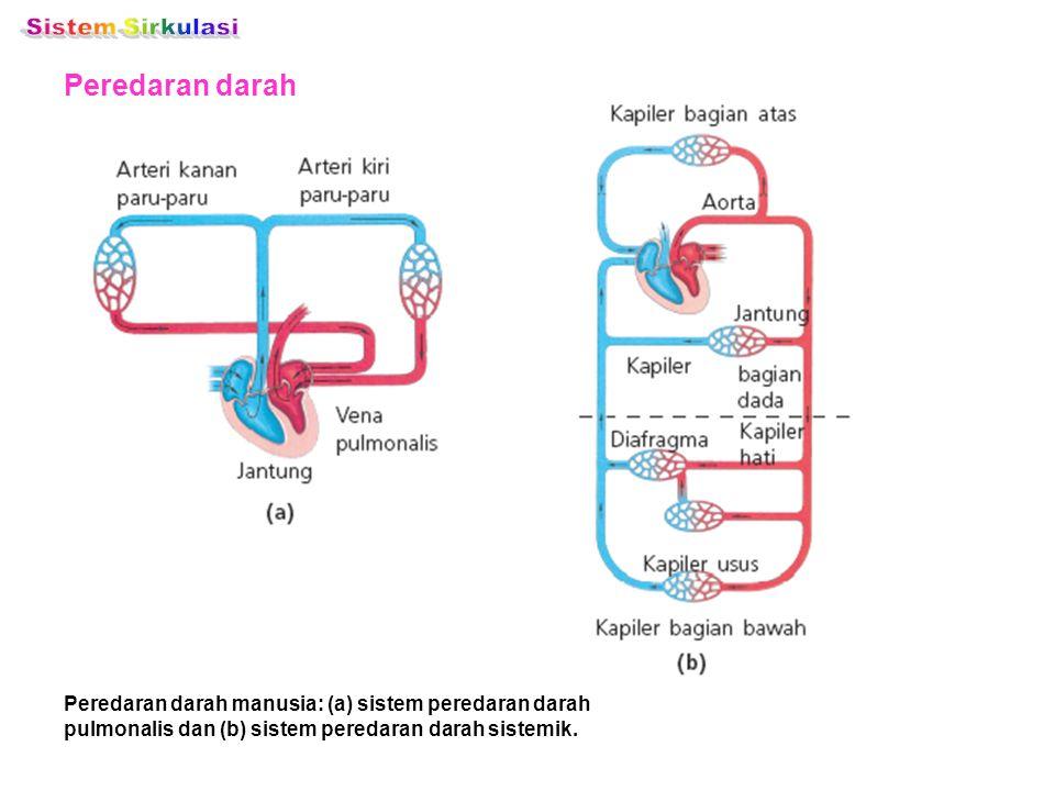 Sistem Sirkulasi Peredaran darah
