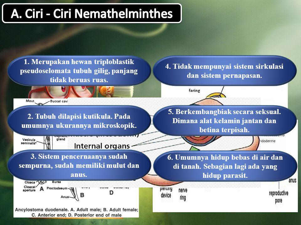 A. Ciri - Ciri Nemathelminthes
