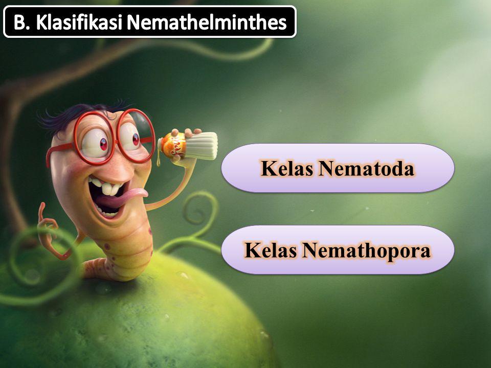B. Klasifikasi Nemathelminthes
