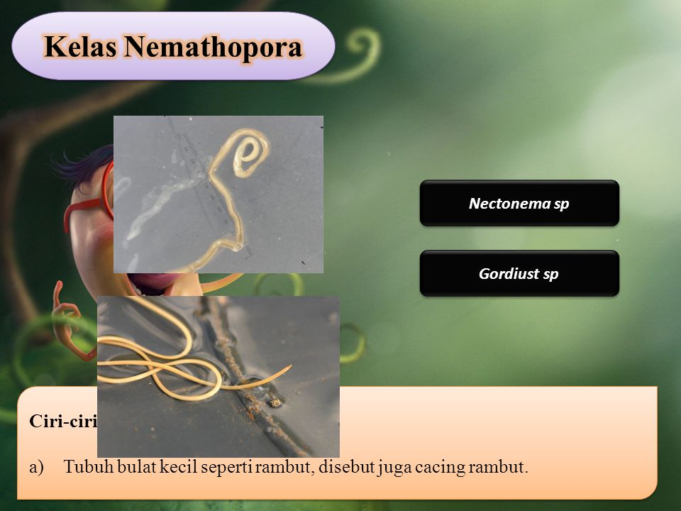Kelas Nemathopora Ciri-ciri Nematoda: