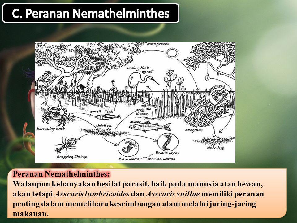 C. Peranan Nemathelminthes