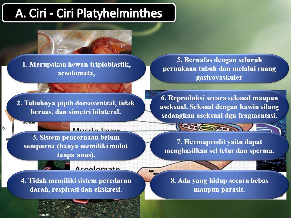 A. Ciri - Ciri Platyhelminthes