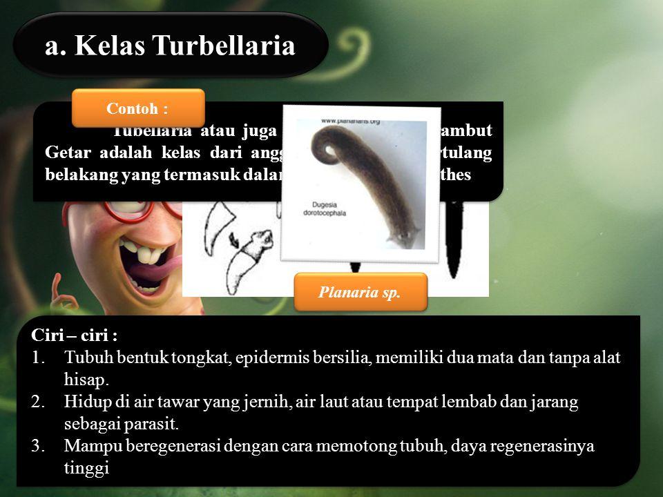a. Kelas Turbellaria Contoh :