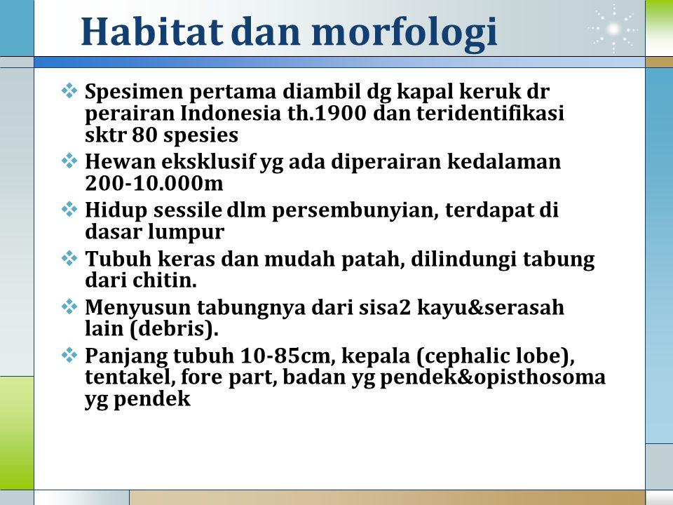 Habitat dan morfologi Spesimen pertama diambil dg kapal keruk dr perairan Indonesia th.1900 dan teridentifikasi sktr 80 spesies.