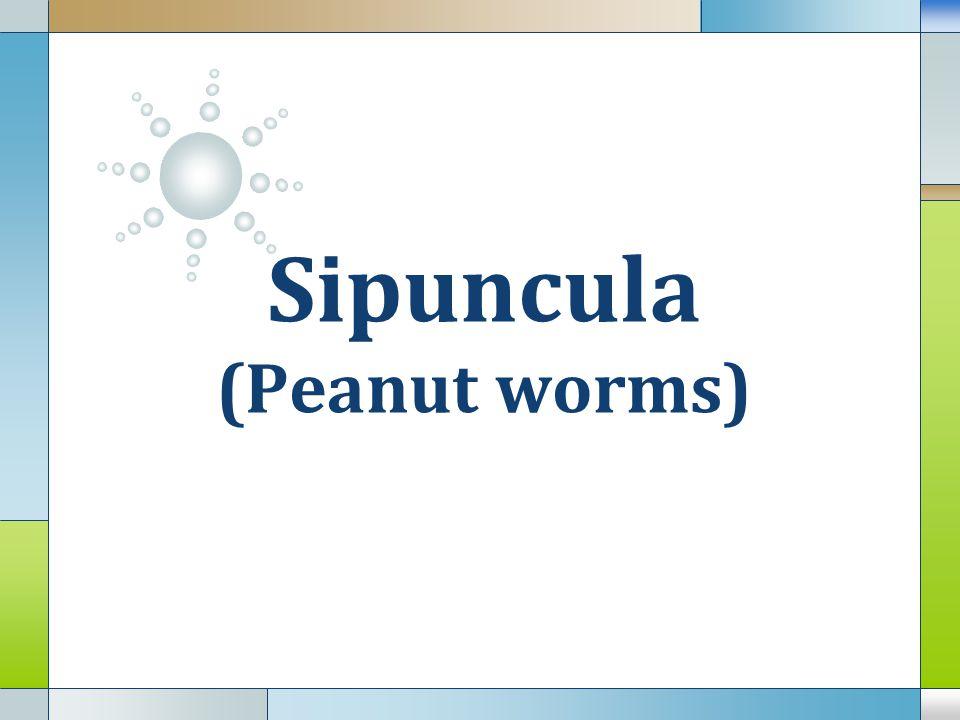 Sipuncula (Peanut worms)