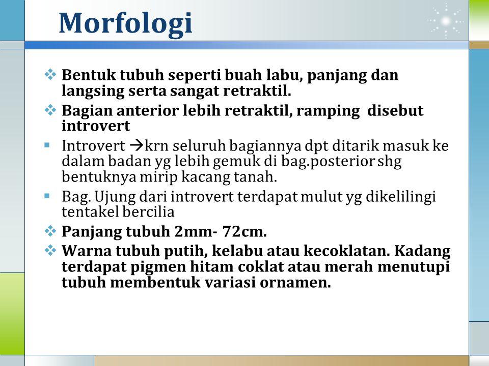 Morfologi Bentuk tubuh seperti buah labu, panjang dan langsing serta sangat retraktil. Bagian anterior lebih retraktil, ramping disebut introvert.