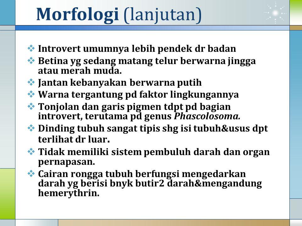 Morfologi (lanjutan) Introvert umumnya lebih pendek dr badan