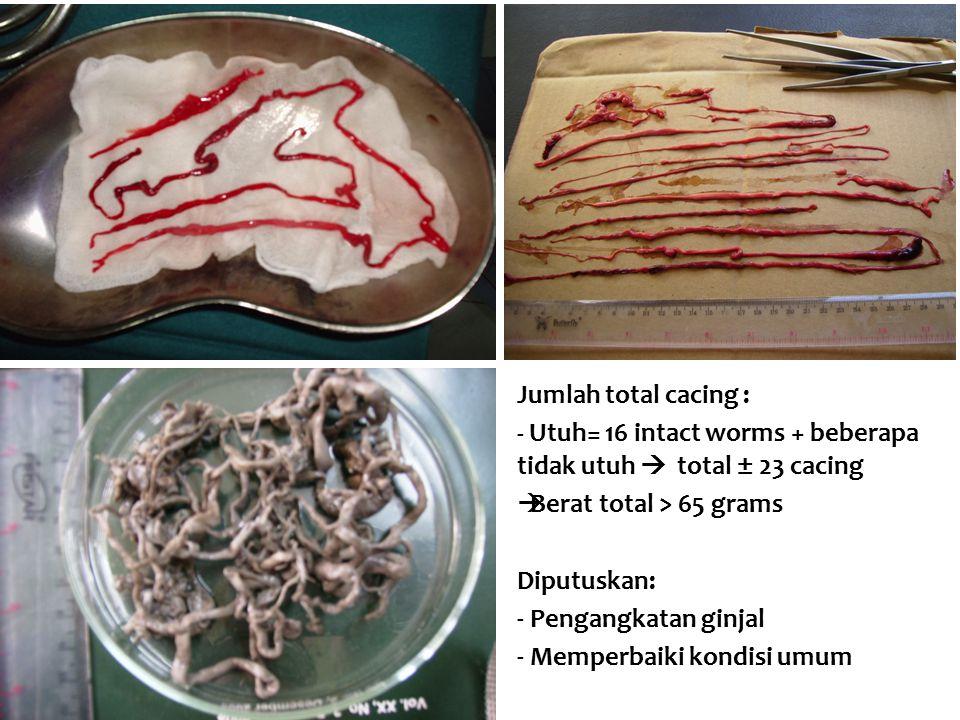 Jumlah total cacing : - Utuh= 16 intact worms + beberapa tidak utuh  total ± 23 cacing. Berat total > 65 grams.