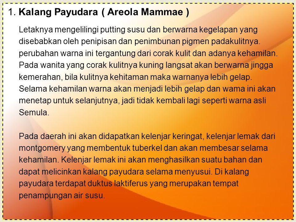 1. Kalang Payudara ( Areola Mammae )