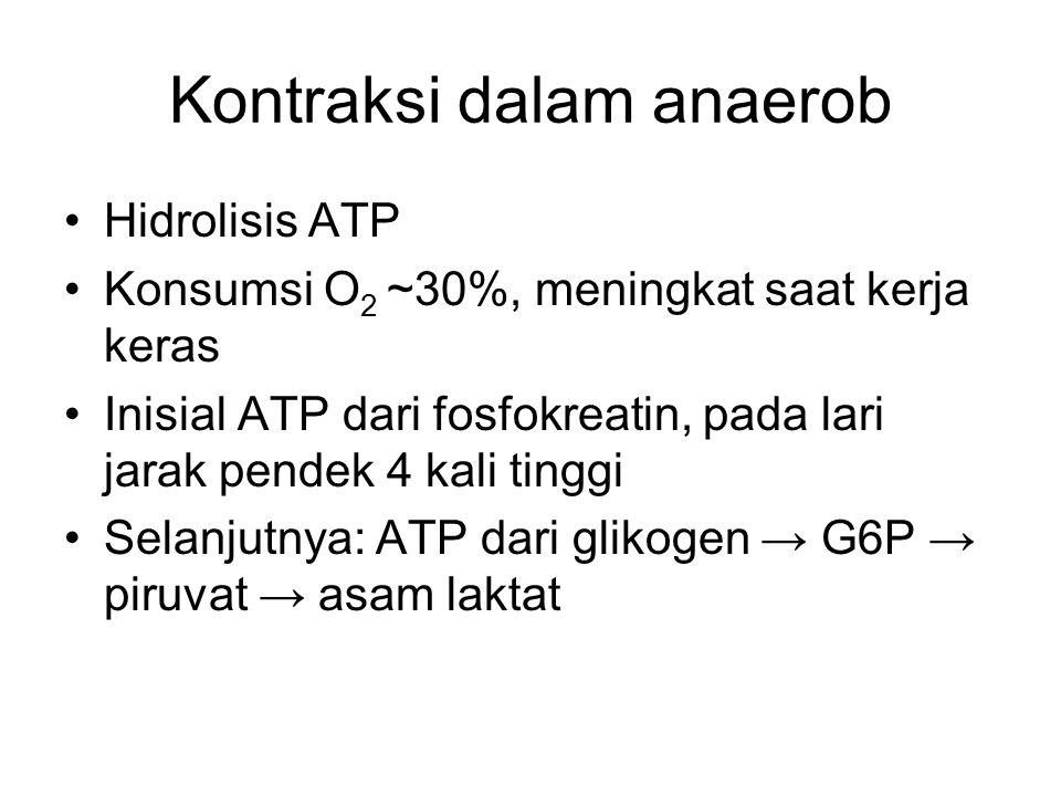 Kontraksi dalam anaerob