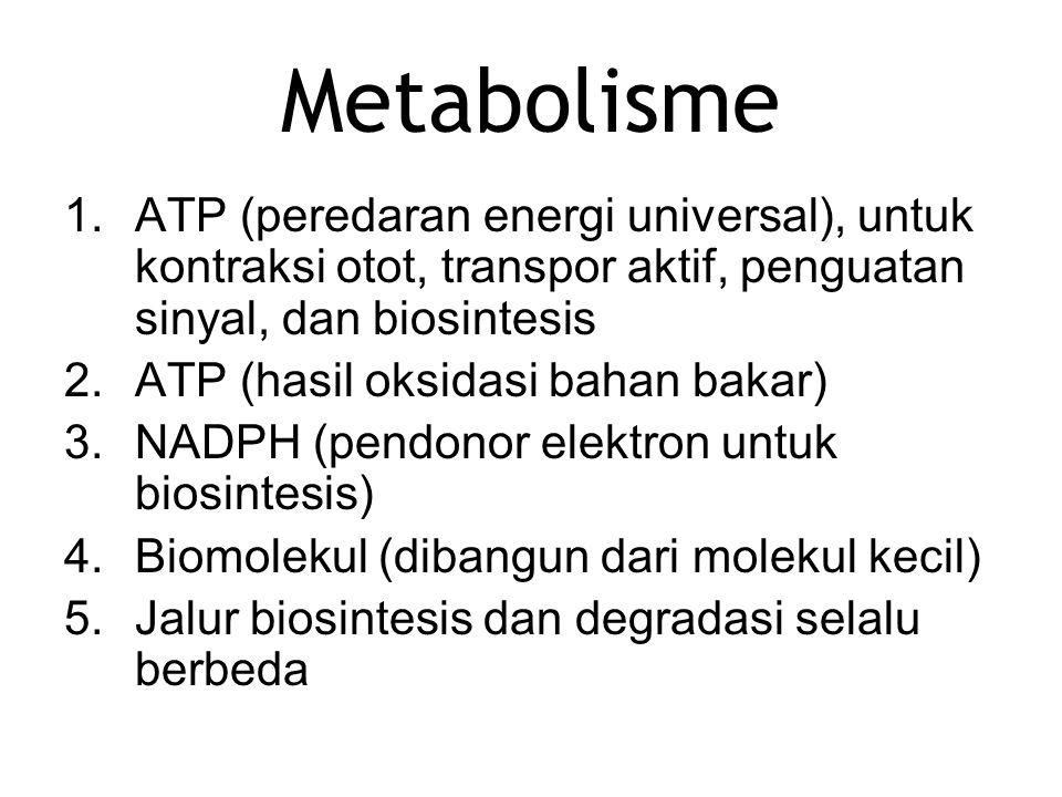 Metabolisme ATP (peredaran energi universal), untuk kontraksi otot, transpor aktif, penguatan sinyal, dan biosintesis.