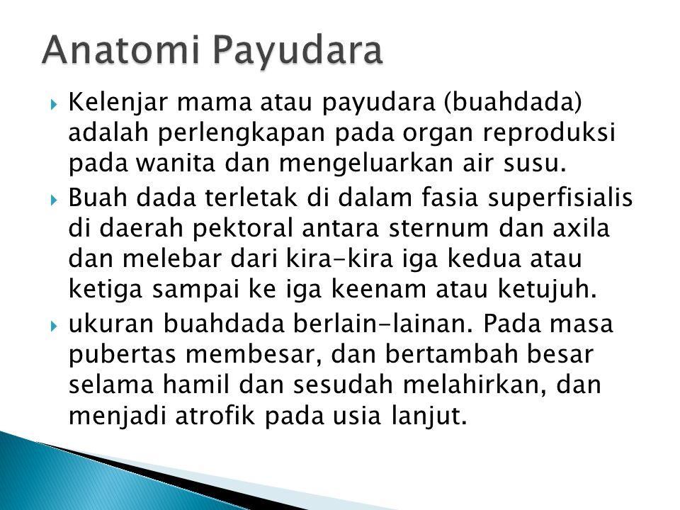 Anatomi Payudara Kelenjar mama atau payudara (buahdada) adalah perlengkapan pada organ reproduksi pada wanita dan mengeluarkan air susu.