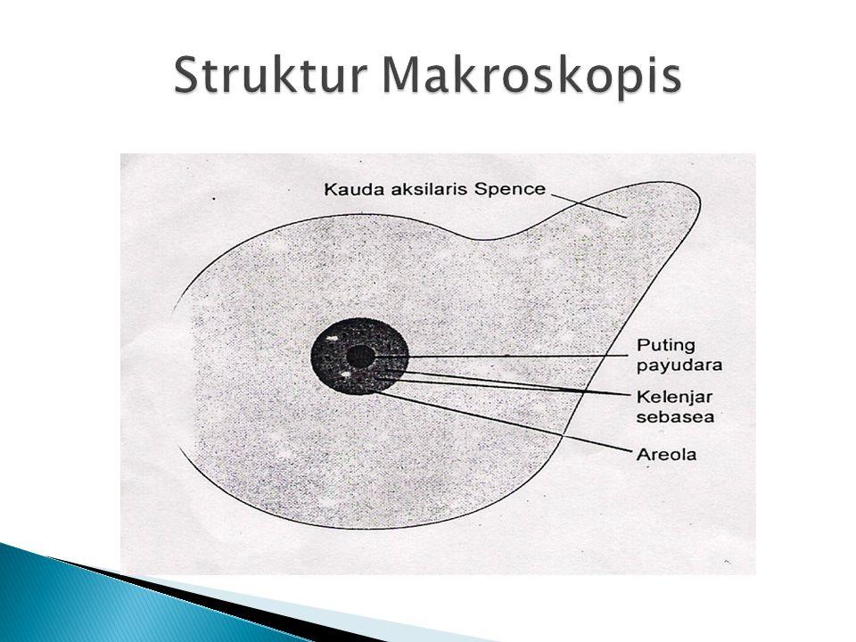 Struktur Makroskopis