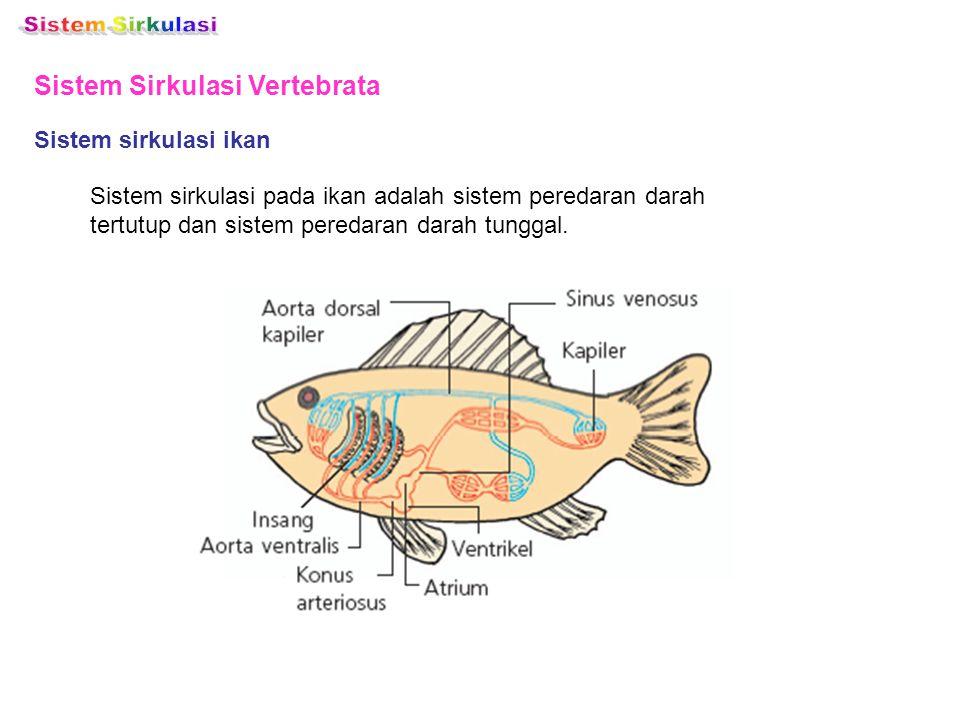 Sistem Sirkulasi Vertebrata