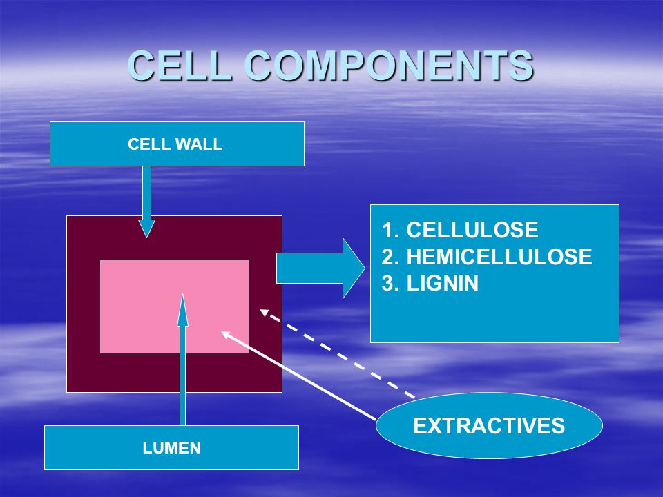 CELL COMPONENTS CELLULOSE HEMICELLULOSE LIGNIN EXTRACTIVES CELL WALL