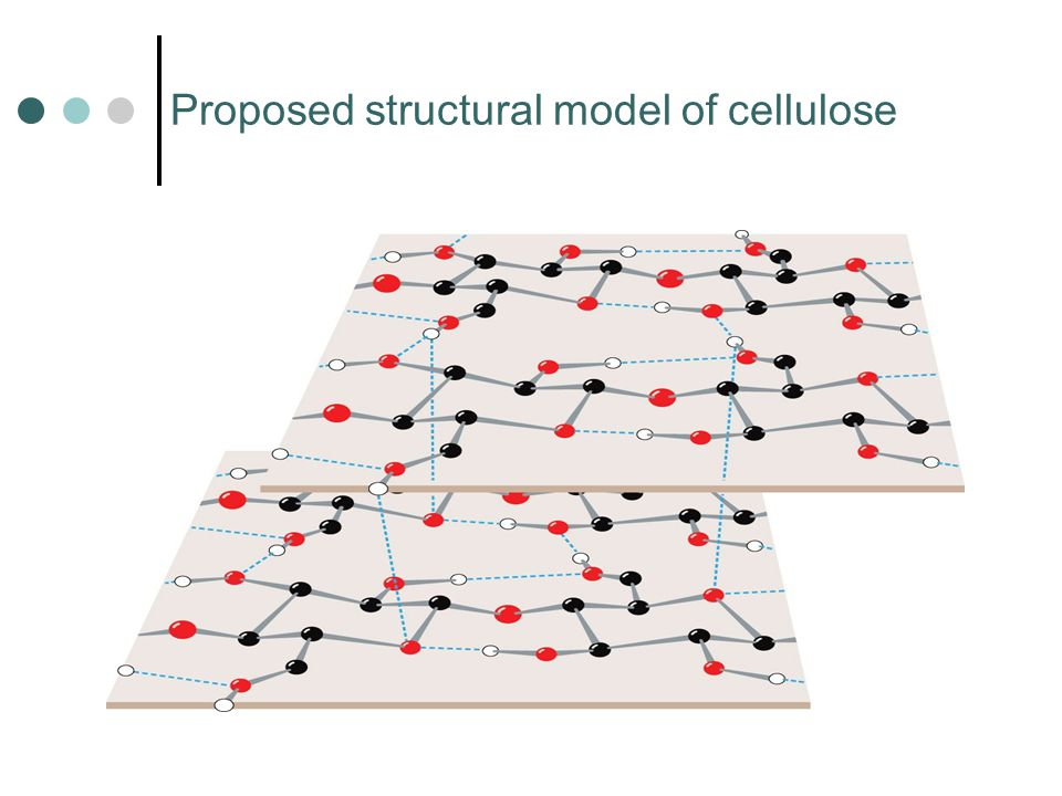 Proposed structural model of cellulose