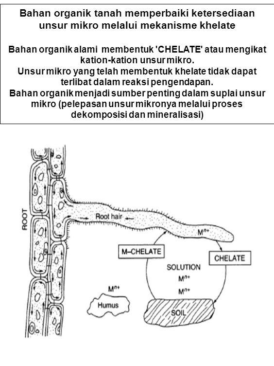 Bahan organik tanah memperbaiki ketersediaan unsur mikro melalui mekanisme khelate