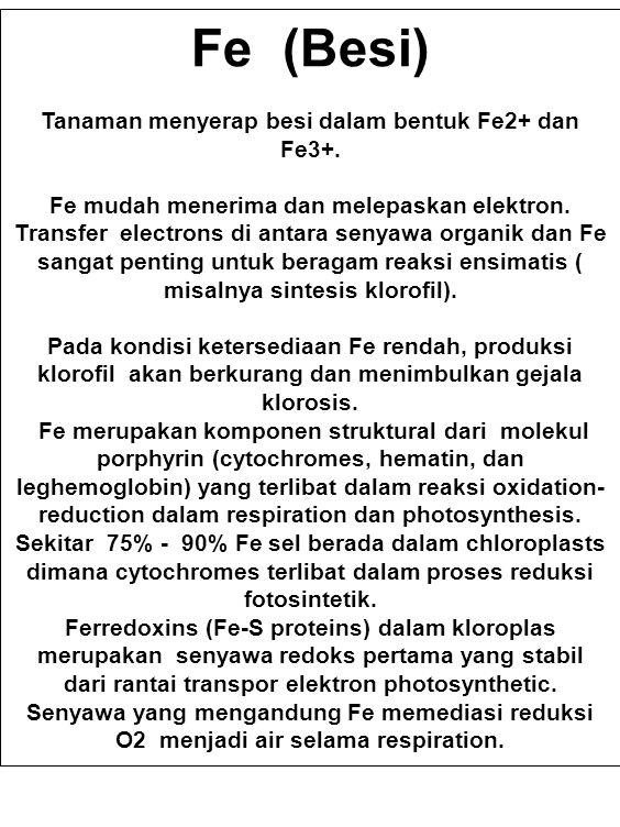 Tanaman menyerap besi dalam bentuk Fe2+ dan Fe3+.