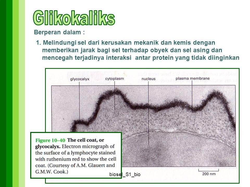 Glikokaliks Berperan dalam :