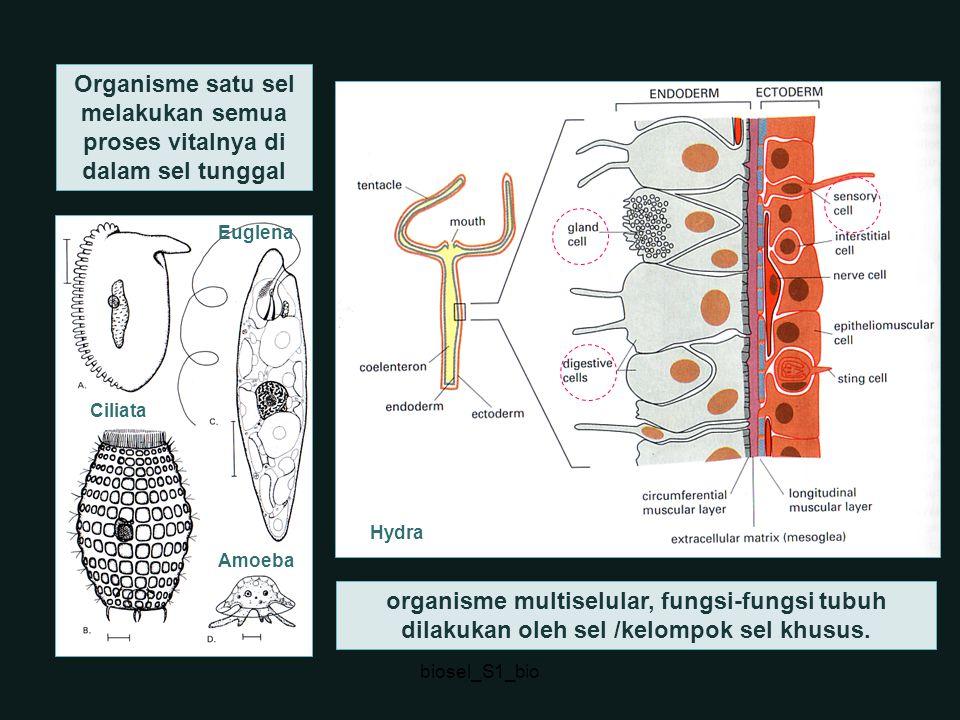 Organisme satu sel melakukan semua proses vitalnya di dalam sel tunggal