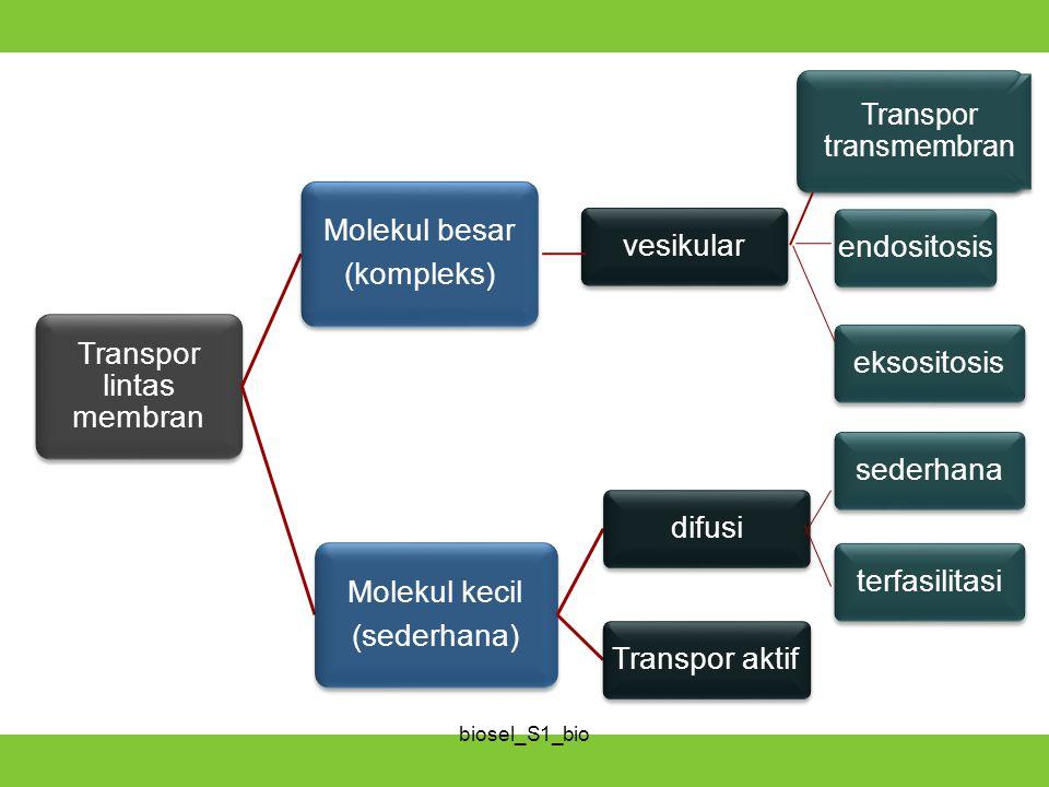 Transpor transmembran