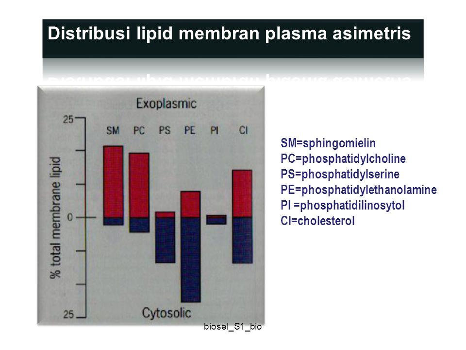 Distribusi lipid membran plasma asimetris