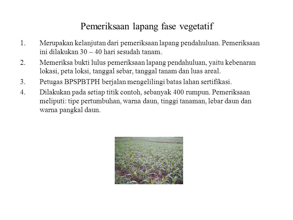 Pemeriksaan lapang fase vegetatif