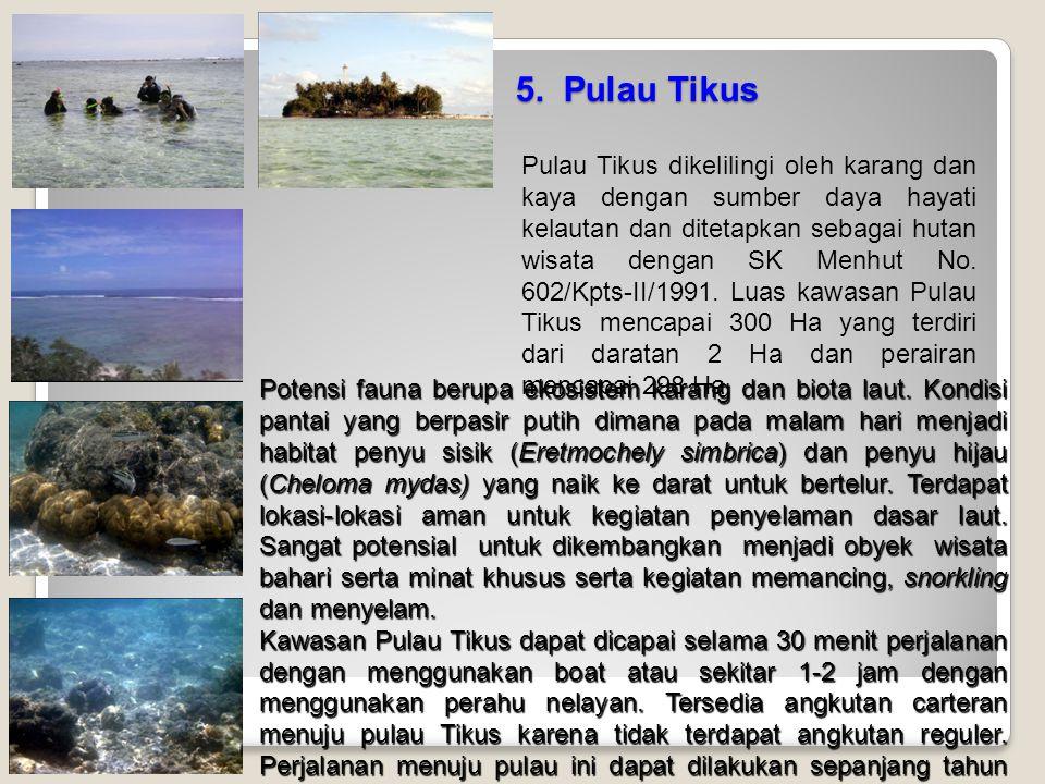 5. Pulau Tikus