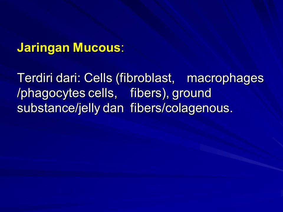 Jaringan Mucous: Terdiri dari: Cells (fibroblast,