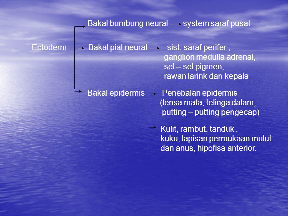 Bakal bumbung neural system saraf pusat