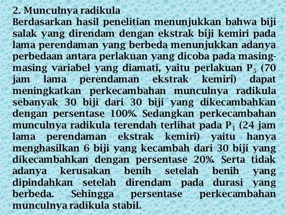 2. Munculnya radikula