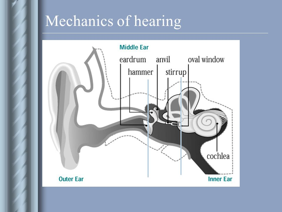 Mechanics of hearing