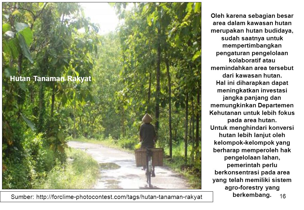 Sumber: http://forclime-photocontest.com/tags/hutan-tanaman-rakyat