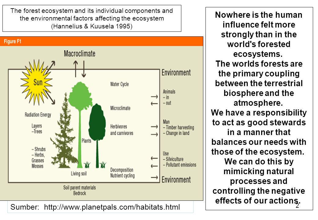 The forest ecosystem and its individual components and the environmental factors affecting the ecosystem (Hannelius & Kuusela 1995)