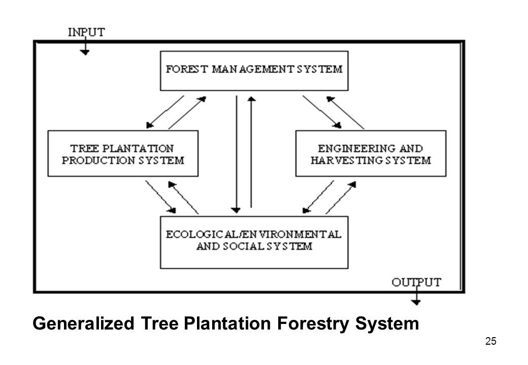 Generalized Tree Plantation Forestry System