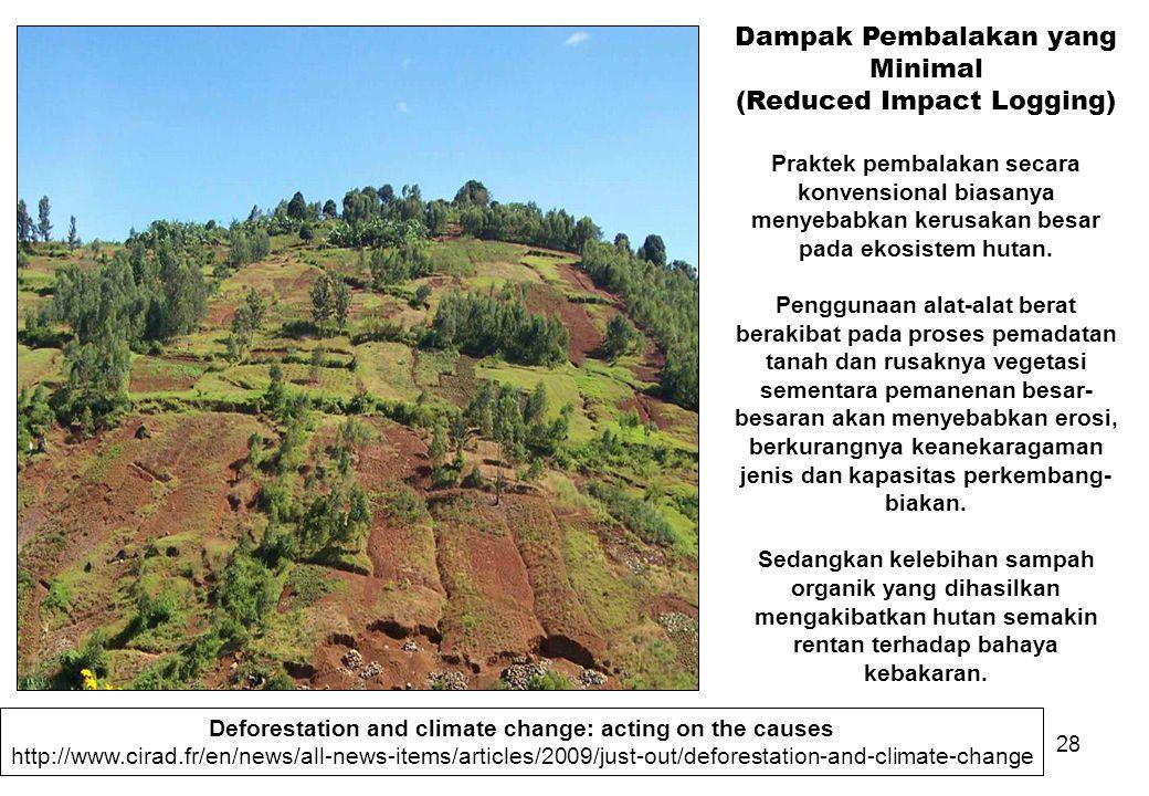 Dampak Pembalakan yang Minimal (Reduced Impact Logging)