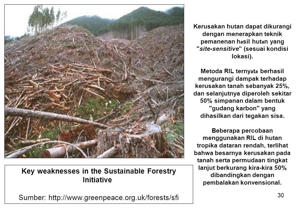 Key weaknesses in the Sustainable Forestry Initiative