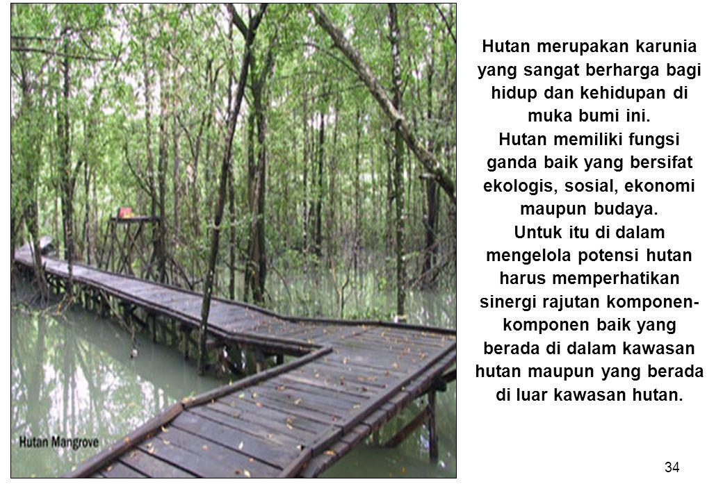 Hutan merupakan karunia yang sangat berharga bagi hidup dan kehidupan di muka bumi ini.